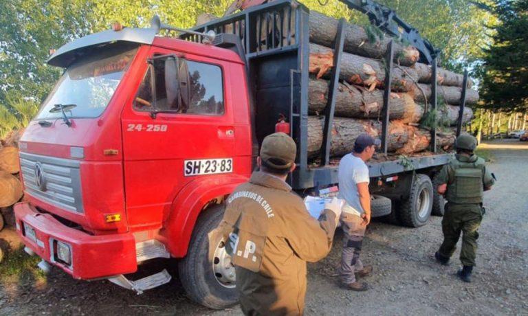 Cañete: descubren a dos personas robando madera en un predio forestal