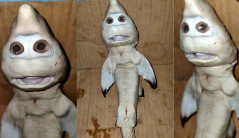 Increíble hallazgo en Indonesia: pescador atrapó un tiburón con 'rostro de humano'