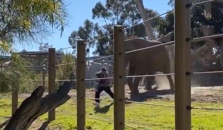 Sujeto ingresó con su hija a recinto de elefantes y casi los embisten: lo acusan de crueldad infantil