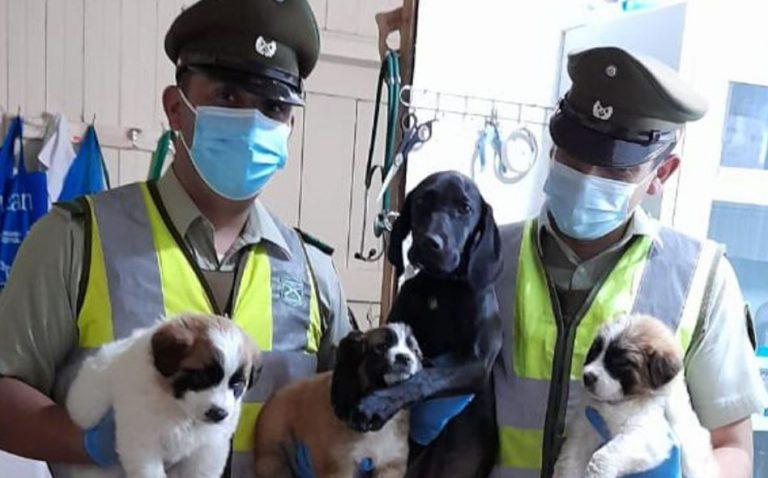 Rescatan a cachorros encerrados en un auto a plena luz del día: dos murieron por asfixia
