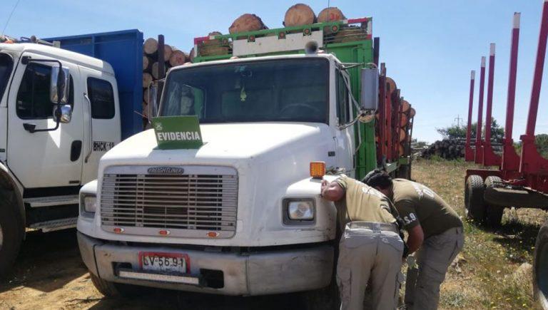 Arauco: detienen a tres sujetos que robaban madera de un predio forestal en camiones