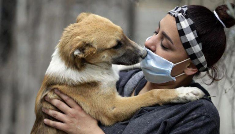 Gobierno realiza importante anuncio sobre mascotas: pueden ir a urgencia sin sacar el permiso