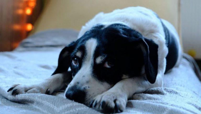 Urgencia médica veterinaria: proponen al Gobierno creación de permiso especial para dichos casos