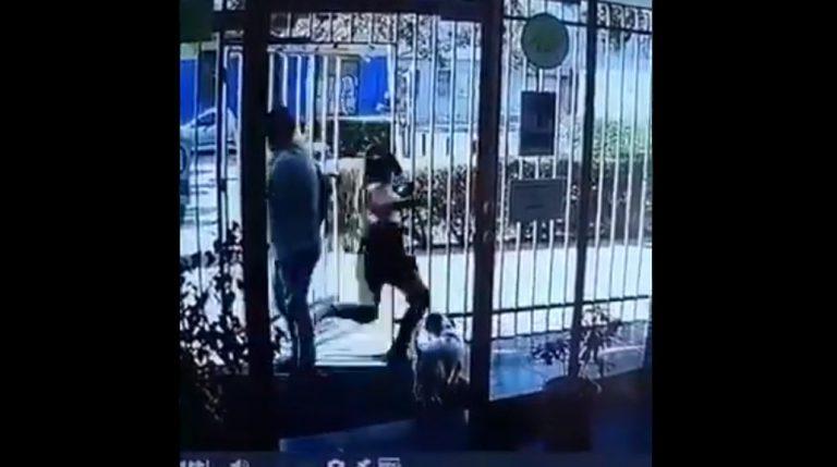 Cobarde agresión: mujer fue detenida por maltrato animal tras minuto de furia en departamento