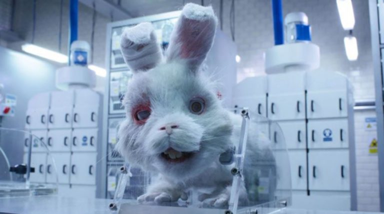 Salvemos a Ralph: la conmovedora campaña que busca terminar con pruebas cosméticas en animales