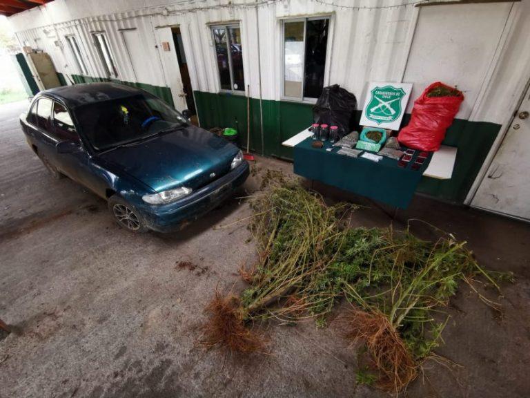 Carabineros de Cañete incautó más de 13 kilos de droga