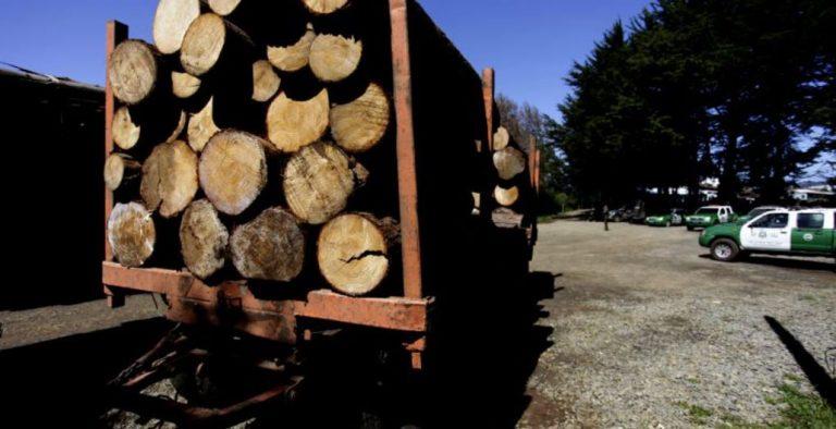 Los Álamos: detienen a siete conductores e incautan sus camiones por robar madera