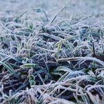 Decretan alerta meteorológica por heladas en diez regiones: la del Biobío está incluida