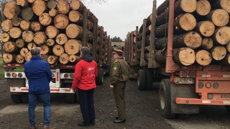 Operativo logra interceptar 5 camiones con madera robada desde Arauco