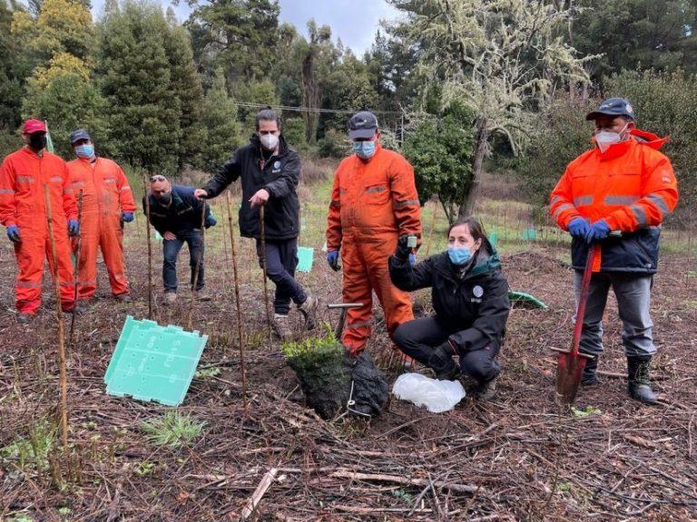 De la mano con la participación ciudadana avanza restauración del Parque Nacional Nonguén