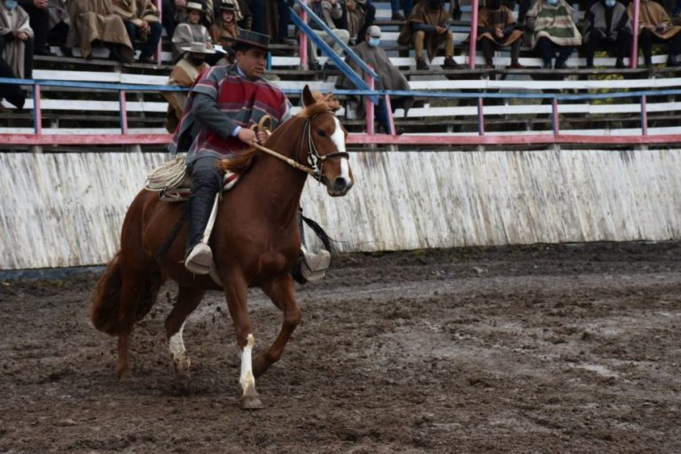 Yumbel dio inicio a la primera clínica de movimiento de la rienda de caballos