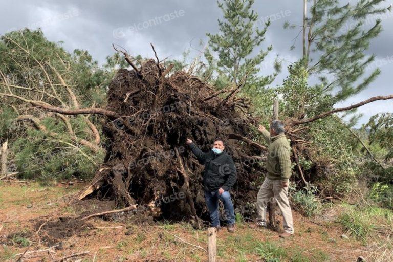 «Sacó los árboles de cuajo»: Las imágenes que dejó el tornado en Tucapel