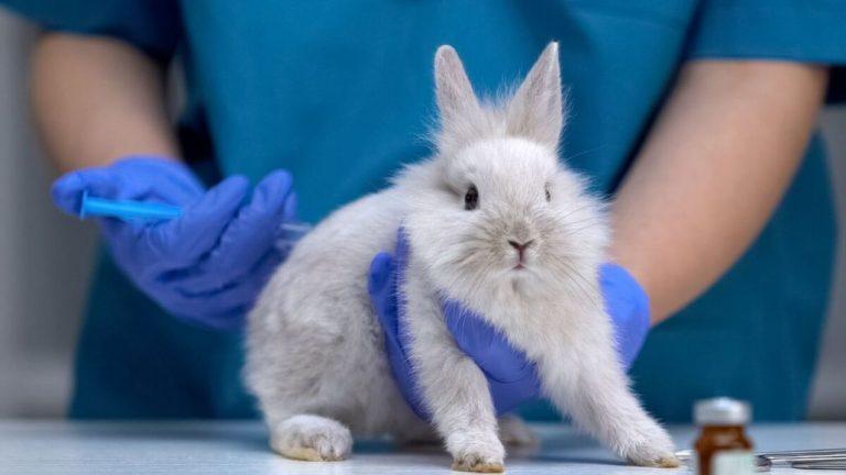 Cámara legislará la prohibición de experimentar productos en animales