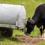Decretan emergencia agrícola para la región del Biobío por sequía