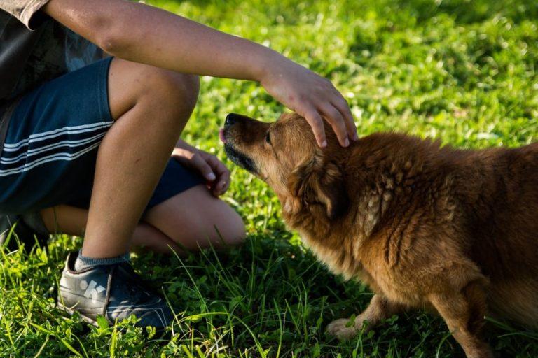 Presentan proyecto para dar un día libre a quienes se les muera su mascota