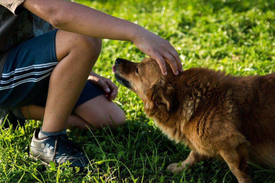 dia libre muerte mascotas chile